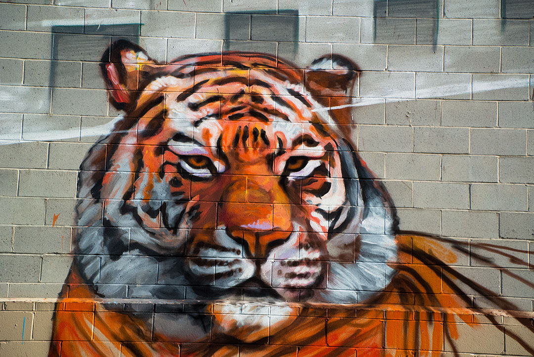 Tiger - detail from Gaia's mural for Open Walls Baltimore 2014