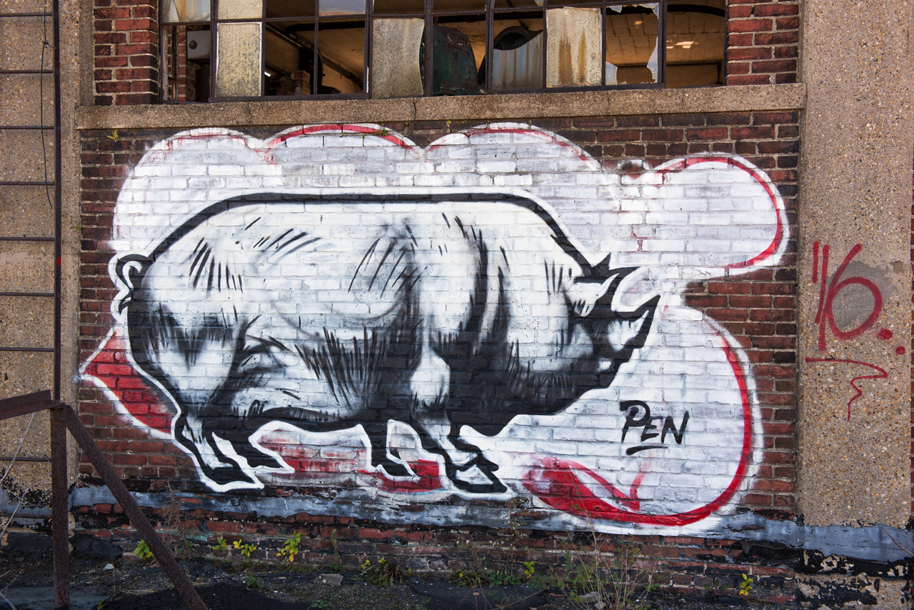 Hog by Pen